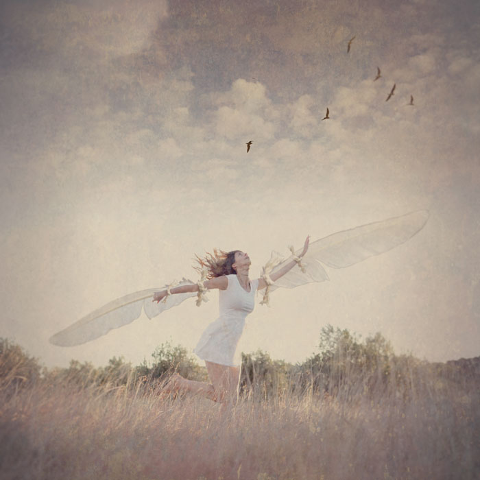 Fine art photography Abigail K photographer wings birds fyling
