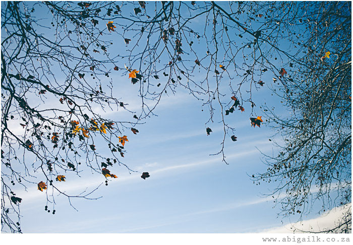 Blue Skies and autumn leaves