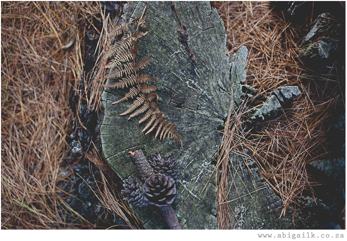 tree trunk in forest with pine cone and pine needles and fern leaf in autumn